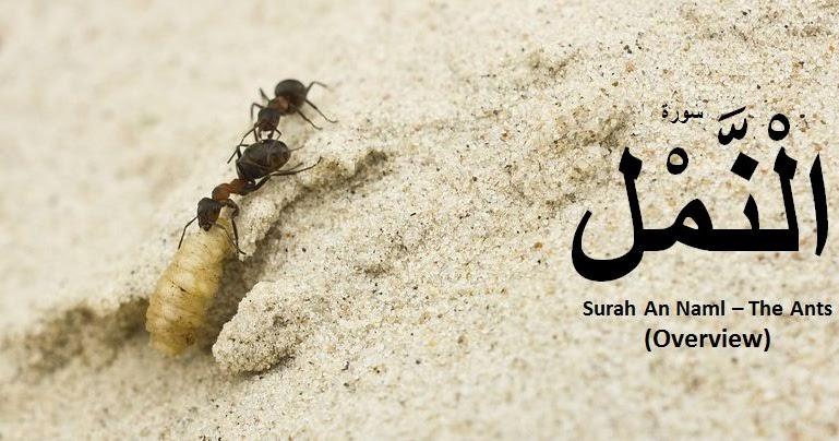 Surah Naml with Urdu translation PDF Download or Read online.